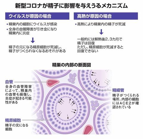 【朝日新聞】コロナに感染後、精子が減る報告が海外で相次ぐ…ウイルスの侵入か高熱か