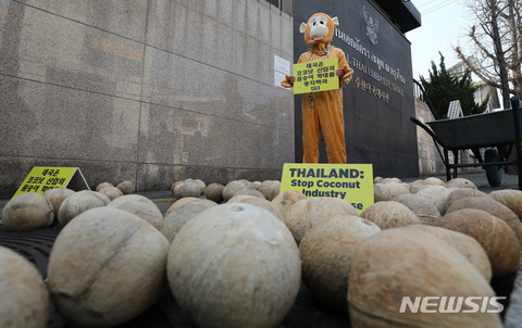 【韓国活動家】駐韓タイ大使館前で「サルの労働搾取を中止せよ」