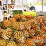 【台湾】パイナップル品種、中国に流出 法改正で対応へ 「日本に追随し、法改正を検討する方針」