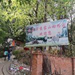【猛獣】中国の動物園 ゴールデンレトリバーがライオンとして展示される