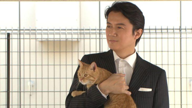 心までイケメンと称賛の声!福山雅治、保護猫との生活を明かす