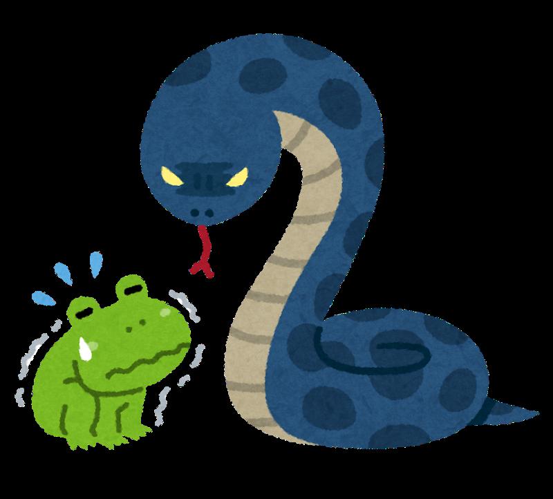 消えたニシキヘビ 専門家らが見つける! 「捜索打ち切り後も」探し続けた