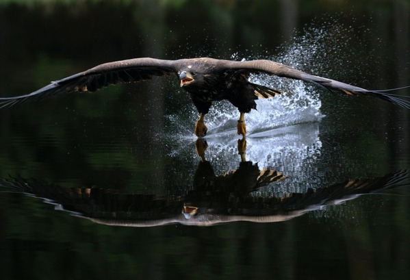 【画像】女さん、自宅のプールで溺れていた鷹を助けた結果wwwwwww