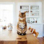 岡庭由征パパ「猫を殺してやりたい」 岡庭由征「そうか、猫は敵なのか」 そして虐待へ
