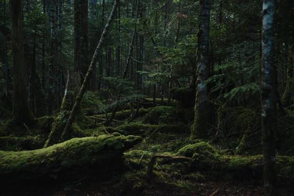 【画像あり】『富士山麓青木ヶ原樹海』へ宝探しに行ってきた結果