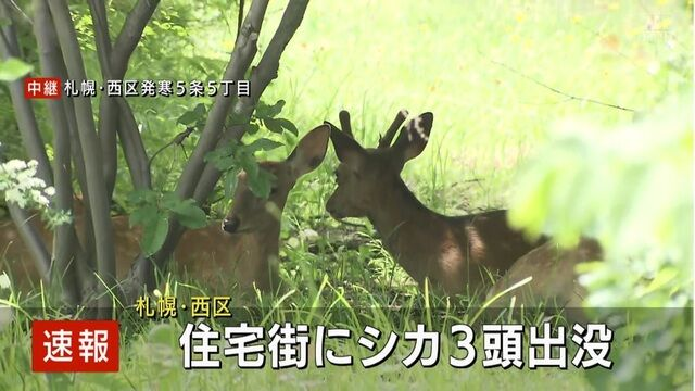 """【札幌】シカ3頭出没もネットでは""""ある指摘""""が続出?"""