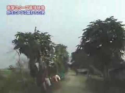 トラを一人で殺し続けた男ついに逮捕wwww バングラデシュの密漁