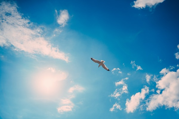 【動画】人間、とうとう街中を優雅に飛べる時代になるwwww