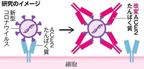 【研究】変異ウイルスにも効くコロナ治療薬候補 阪大などのグループが開発