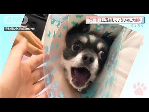 【かわヨ】犬と猫の「エモい」gifとか画像くれ!!!!!!!!!