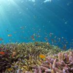 沖縄の海がヤバイ 沖縄の海が真っ赤でヤバイ