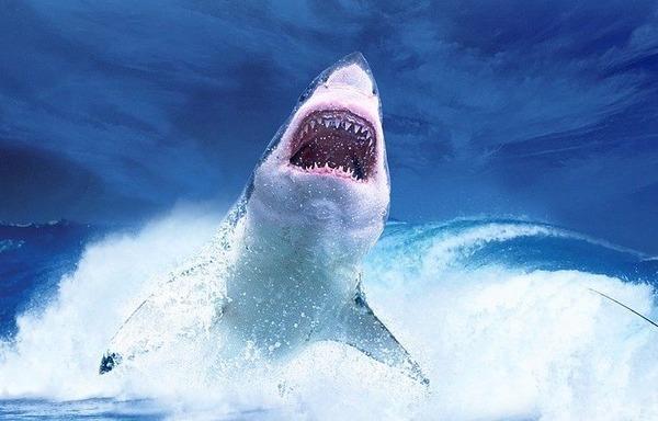 【画像】サメの歯で作った武器、ガチで攻撃力高そうwwwwwww
