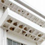 まるでマンション 中学校でツバメの巣150個の新築ラッシュ