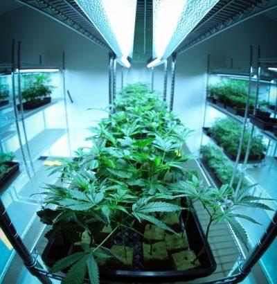 コロンビア、乾燥した大麻の花の輸出を合法化wwwwwwww