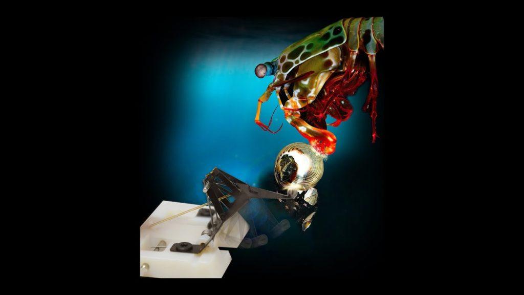 【いきもの】弾丸を超える速さで繰り出され、水槽のガラスにもヒビを入れるシャコのパンチをマネできるロボットが誕生