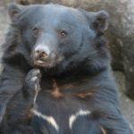 クマが家に入ってきて怪我 岩手