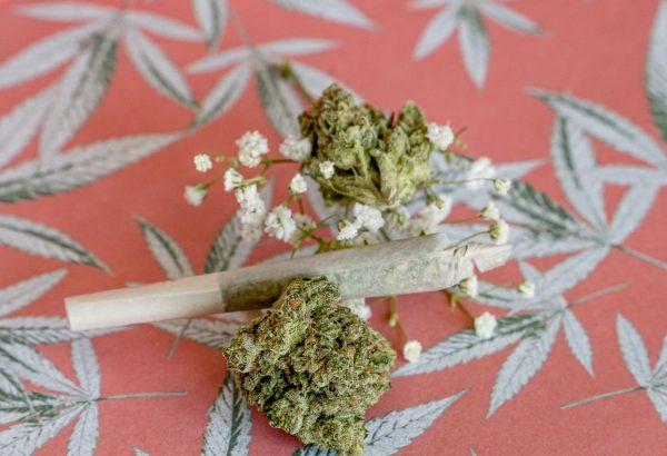 大麻、どんどん日本で増えようとしている模様wwwwww