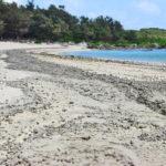 【各地】喜界島の海岸に大量の軽石が漂着 1200km小笠原諸島の海底火山から漂着か